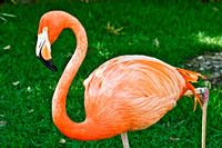 Flamingo, Bird, Florida